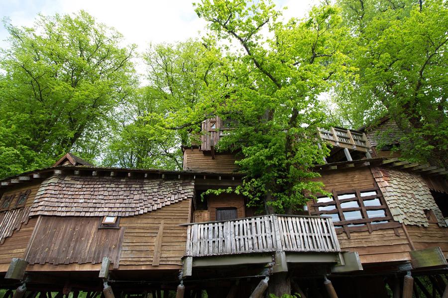 Tekneco le case in legno piacciono anche sugli alberi for Case in legno sugli alberi